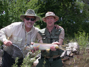 colorado fishing brown trout