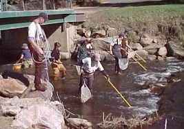 sampling line for counting fish