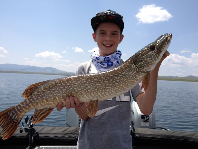 Colorado fishing network fish tails photos of colorado for Pike fishing colorado